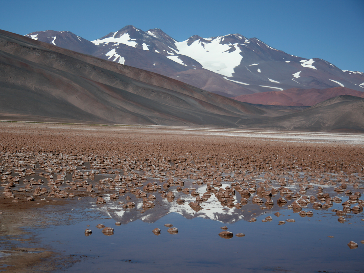 Mineralized microbialites within Laguna Negra, Catamarca Province, Argentina