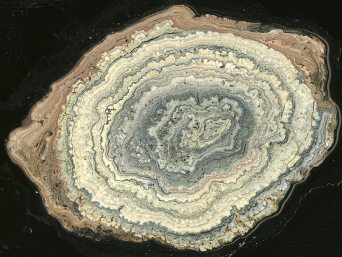 Cross-section of Laguna Negra oncolite, showing complex layering