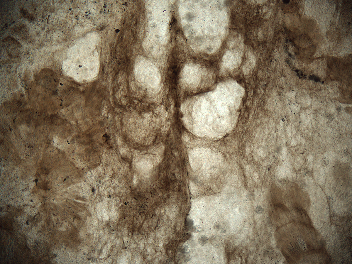 Void-rich, tufted filament mat from the Mesoproterozoic Angmaat Formation